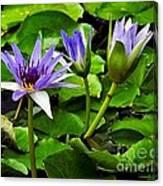 Blue Lilies Canvas Print