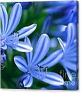 Blue Lily Of The Nile Canvas Print