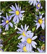 Blue Mums Canvas Print