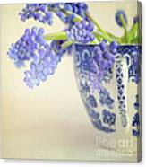 Blue Muscari Flowers In Blue And White China Cup Canvas Print