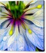 Blue Nigella Canvas Print
