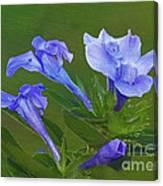 Blue On Green Canvas Print
