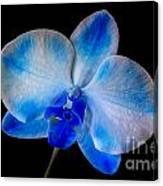 Blue Orchid Bloom Canvas Print