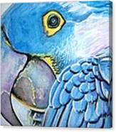 Blue Parrot Canvas Print