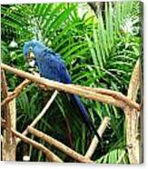 Blue Parrot Canvas Print