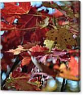 Blue Ridge Autumn Leaves 1.1 Canvas Print