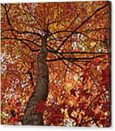Blue Ridge Autumn Leaves 1.3 Canvas Print