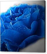Blue Rose With Drops Canvas Print