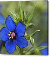 Blue Royalty Canvas Print