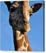Blue Sky Giraffe Canvas Print
