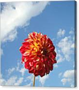 Blue Sky Nature Art Prinst Red Dahlia Flower Canvas Print