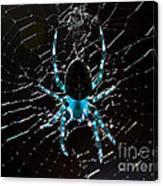 Blue Spider Canvas Print