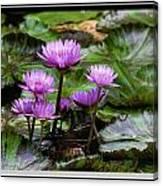 Blue Tropical Water Lilies Canvas Print