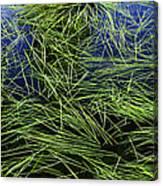 Blue Water Green Grass Glacier National Park Canvas Print