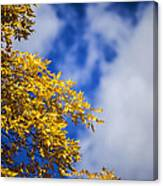 Blue White And Gold Canvas Print