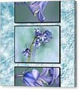 Bluebell Triptych Canvas Print