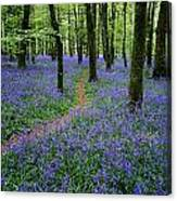 Bluebell Wood, Near Boyle, Co Canvas Print
