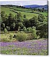 Bluebells In A Field, Sally Gap, County Canvas Print