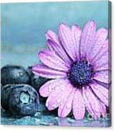 Blueberries And Daisy Canvas Print