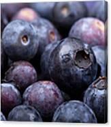 Blueberry Background Canvas Print