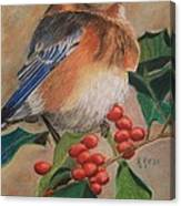 Bluebird And Berries Canvas Print