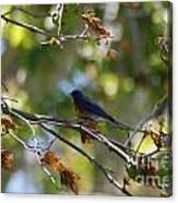 Bluebird At Rest Canvas Print