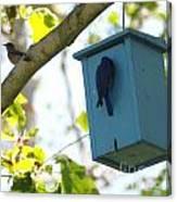 Bluebird Hanging Around Canvas Print