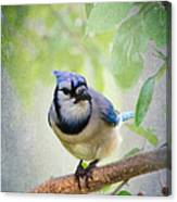 Bluejay In A Tree Canvas Print