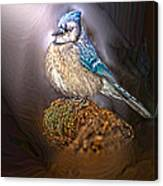Bluejay In Spotlight Canvas Print