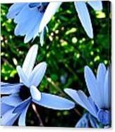 Bluey Twinkles Canvas Print