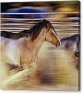 Blurred View Of Horses Running Through Canvas Print