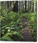 Boardwalk Winds Through The Forest Canvas Print