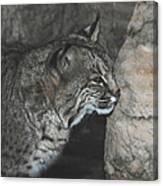 Bobcat Love II Canvas Print