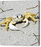 Boca Grande Crab Canvas Print