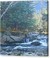 Bog Brook Canvas Print