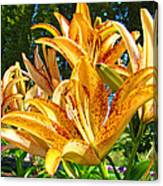 Bold Colorful Orange Lily Flowers Garden Canvas Print