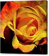 Bold Rose 2 Canvas Print