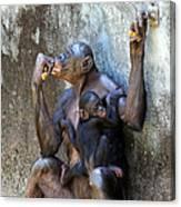 Bonobo 1 Canvas Print