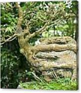 Bonsai Root And Stone Canvas Print
