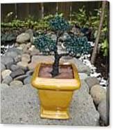 Bonsai Tree Medium Square Golden Vase Canvas Print