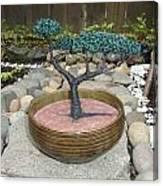 Bonsai Tree Round Brown Planter Canvas Print