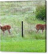 Bookend Twin Bucks Canvas Print