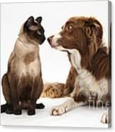 Border Collie & Siamese Cat Canvas Print