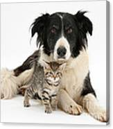 Border Collie And Kitten Canvas Print