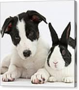 Border Collie Pup And Dutch Rabbit Canvas Print