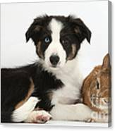 Border Collie Pup And Netherland-cross Canvas Print