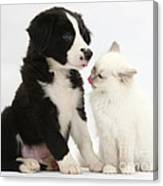 Border Collie Pup And White Kitten Canvas Print