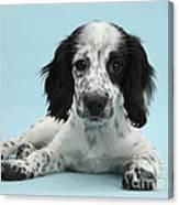Border Collie X Cocker Spaniel Puppy Canvas Print