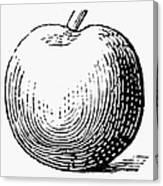 Botany: Apple Canvas Print