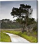 Botany Bay Pathway Tree Canvas Print
